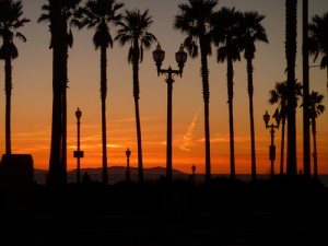 apts california: palm trees