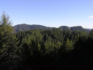 apts california: redwood forest