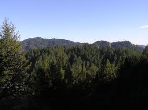 apts california: redwood forest